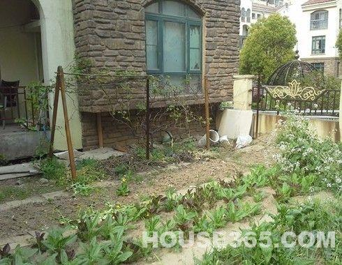 独家小院设计图 花园展示